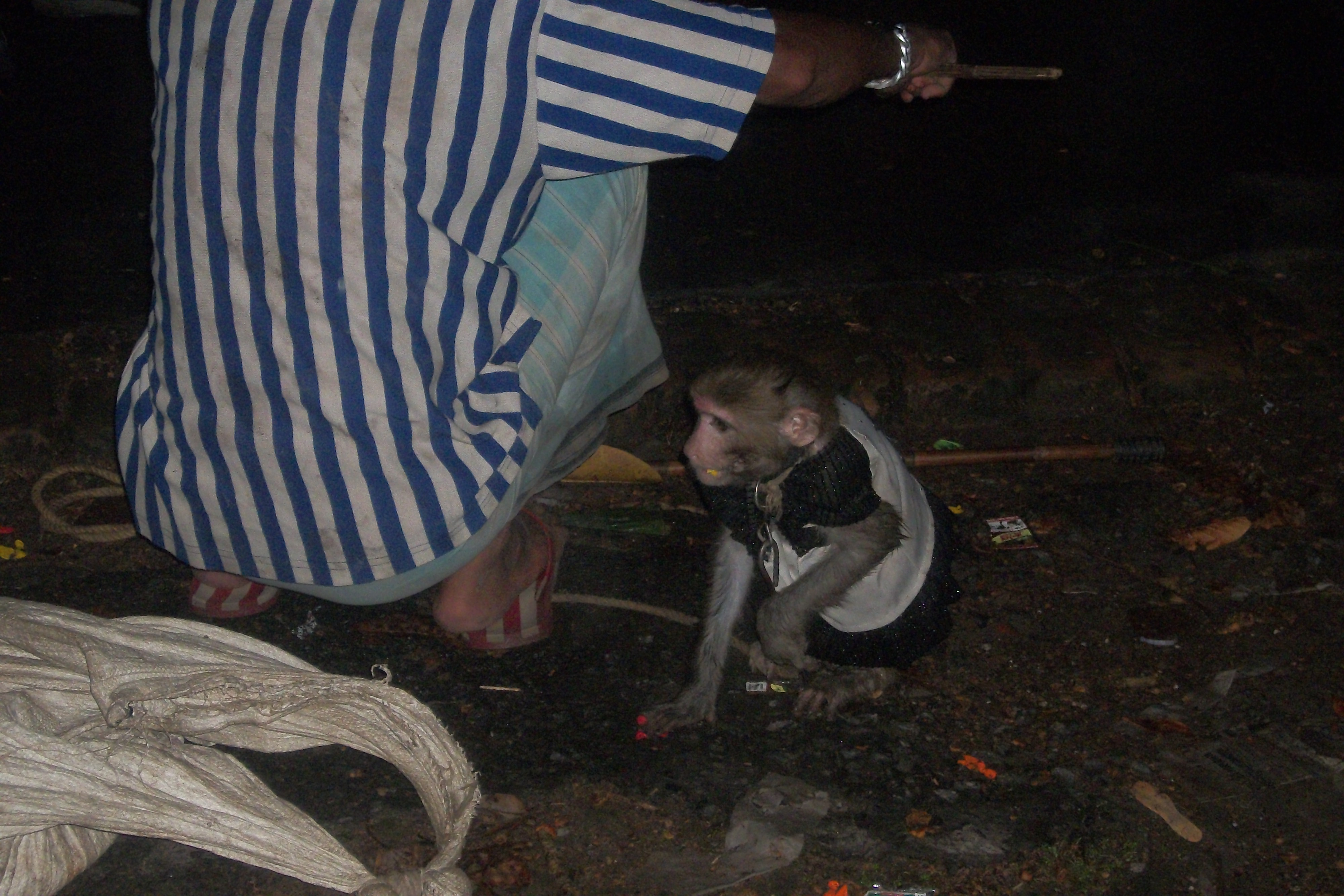 Rancho-Monkey acts are performed near the Victoria memorial-Kolkata